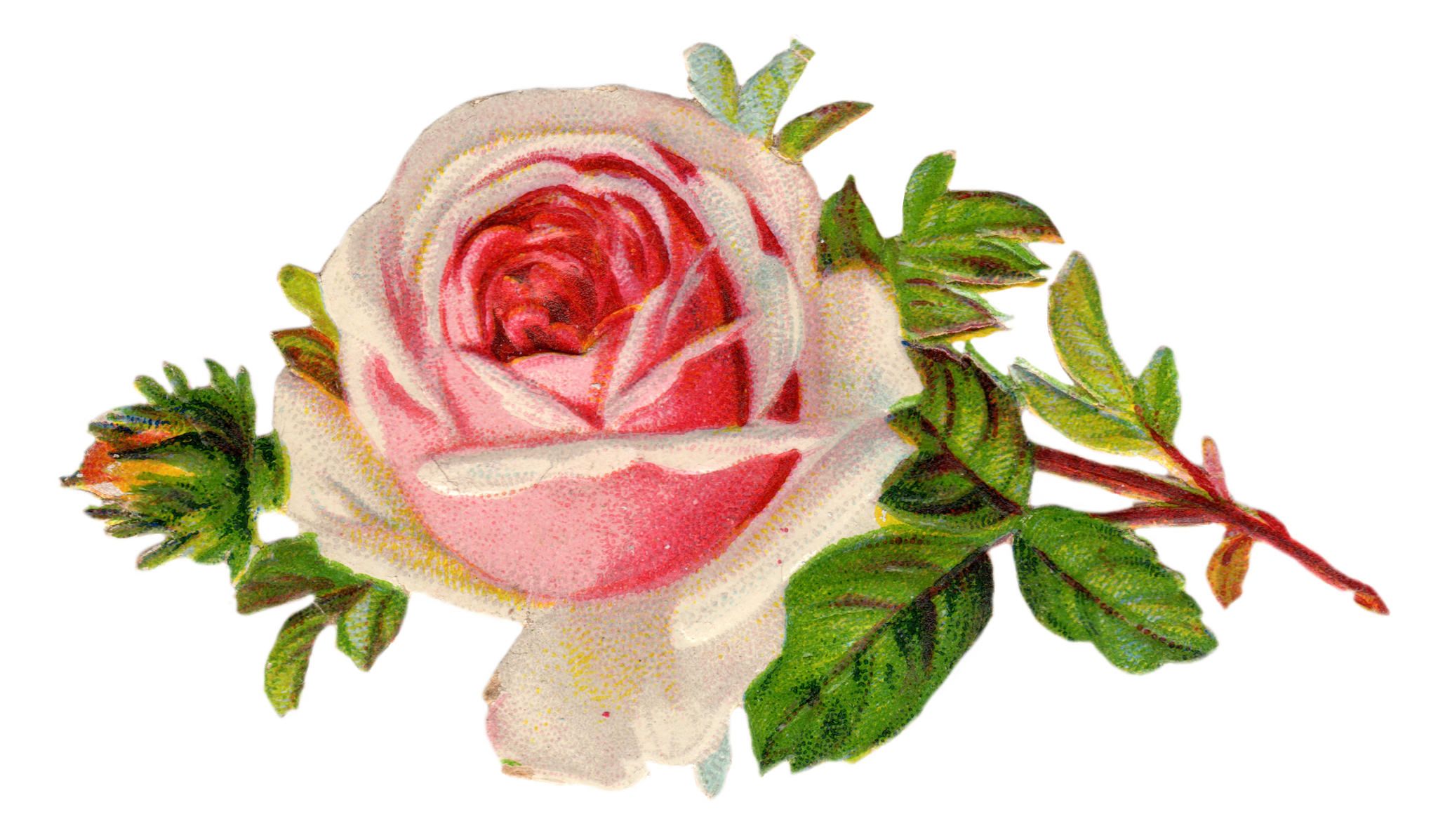 Free Vintage Rose Clip Art By FPTFYVintage Rose Clip Art
