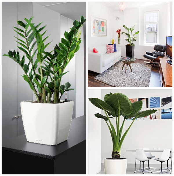 do you want to decorate your home with indoor plants if so you need to ...