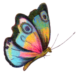 royalty-free-image-butterfly-fptfy