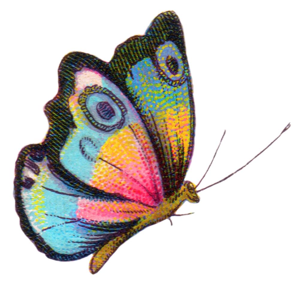 Royalty Free Image Colorful Butterfly