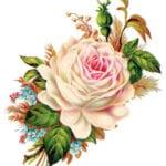 free-vintage-rose-transfer-FPTFY-3