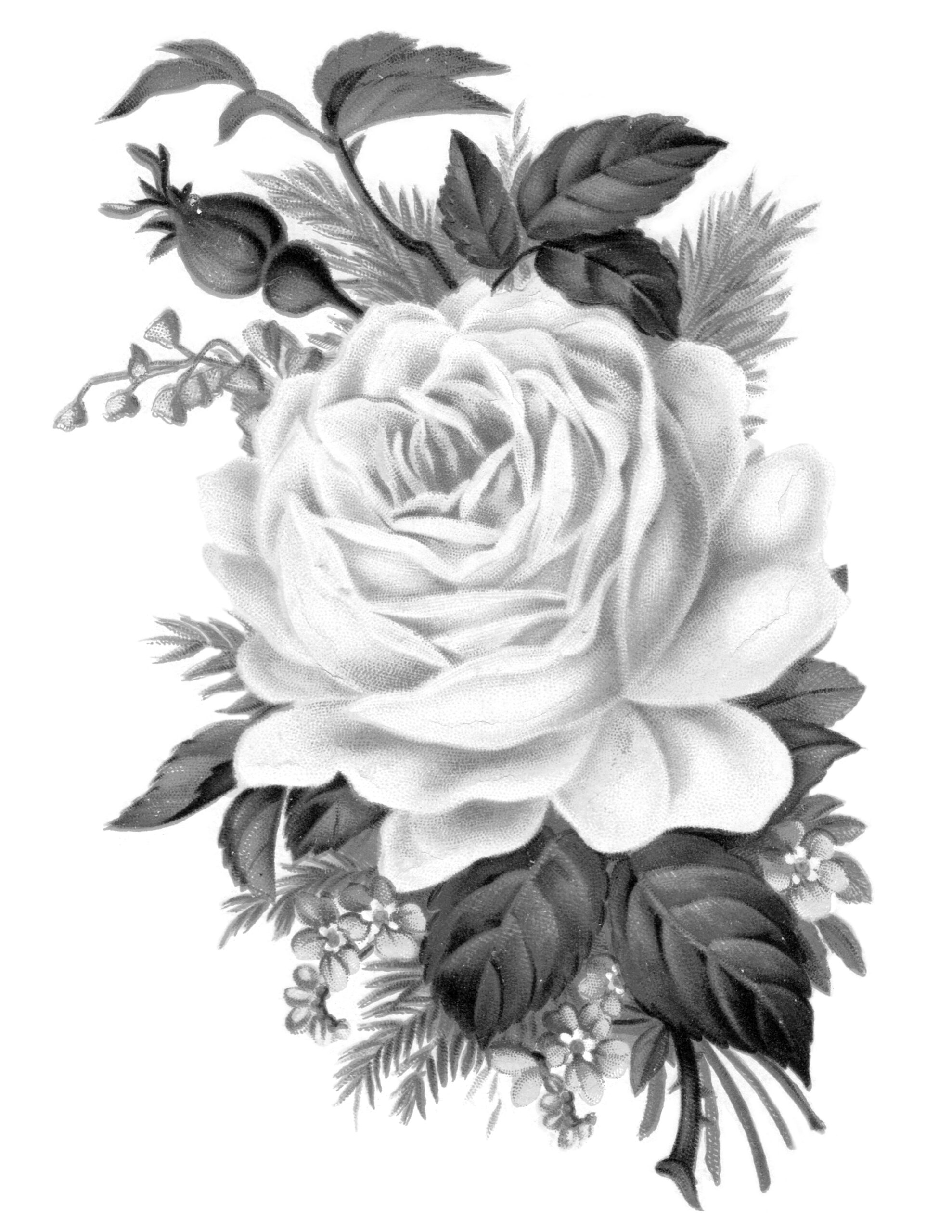 Tea Rose Clipart Black And White: Clip Art: Royalty Free Gorgeous Vintage Rose Image