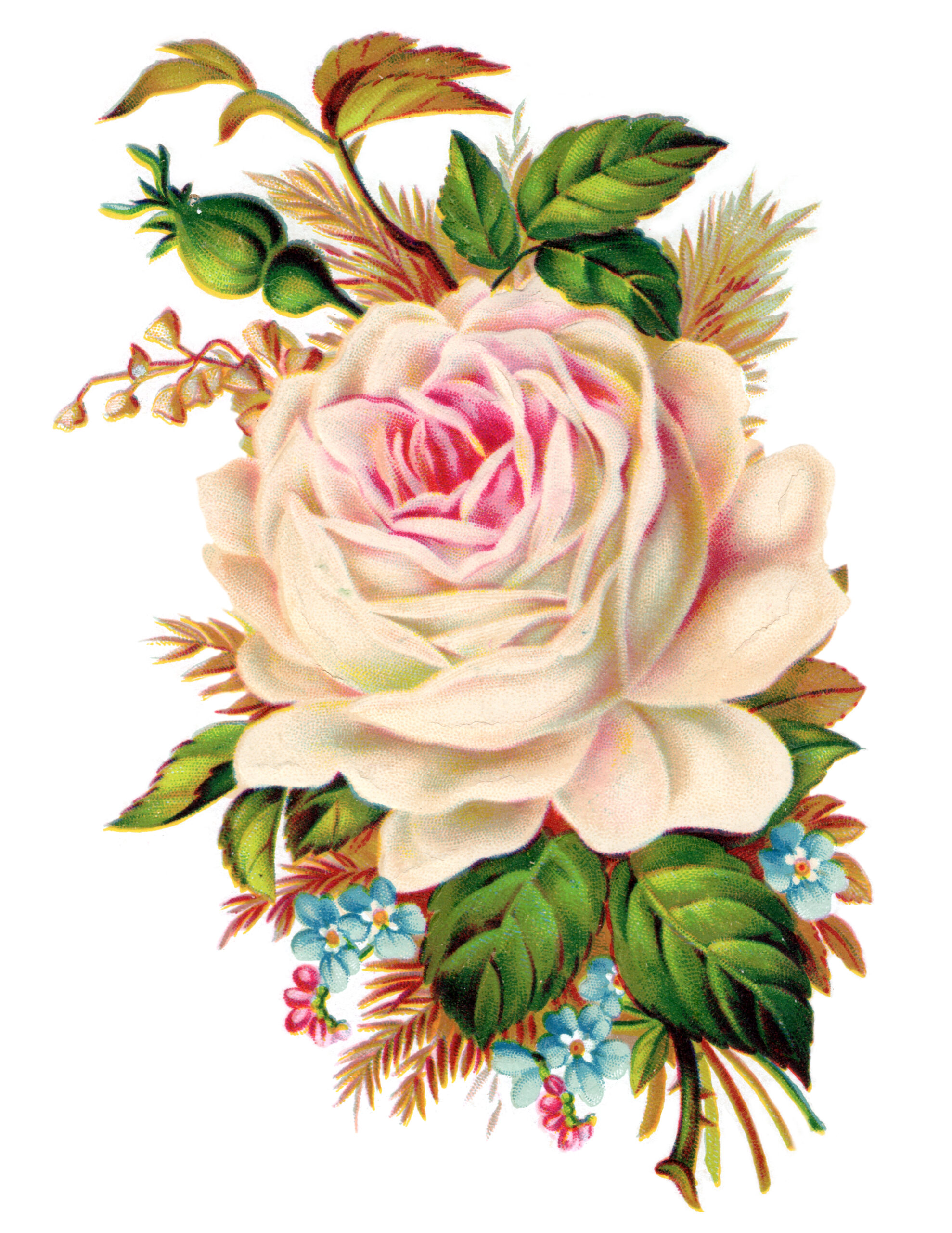 Lovely Clip Art Royalty Free Gorgeous Vintage Rose Image