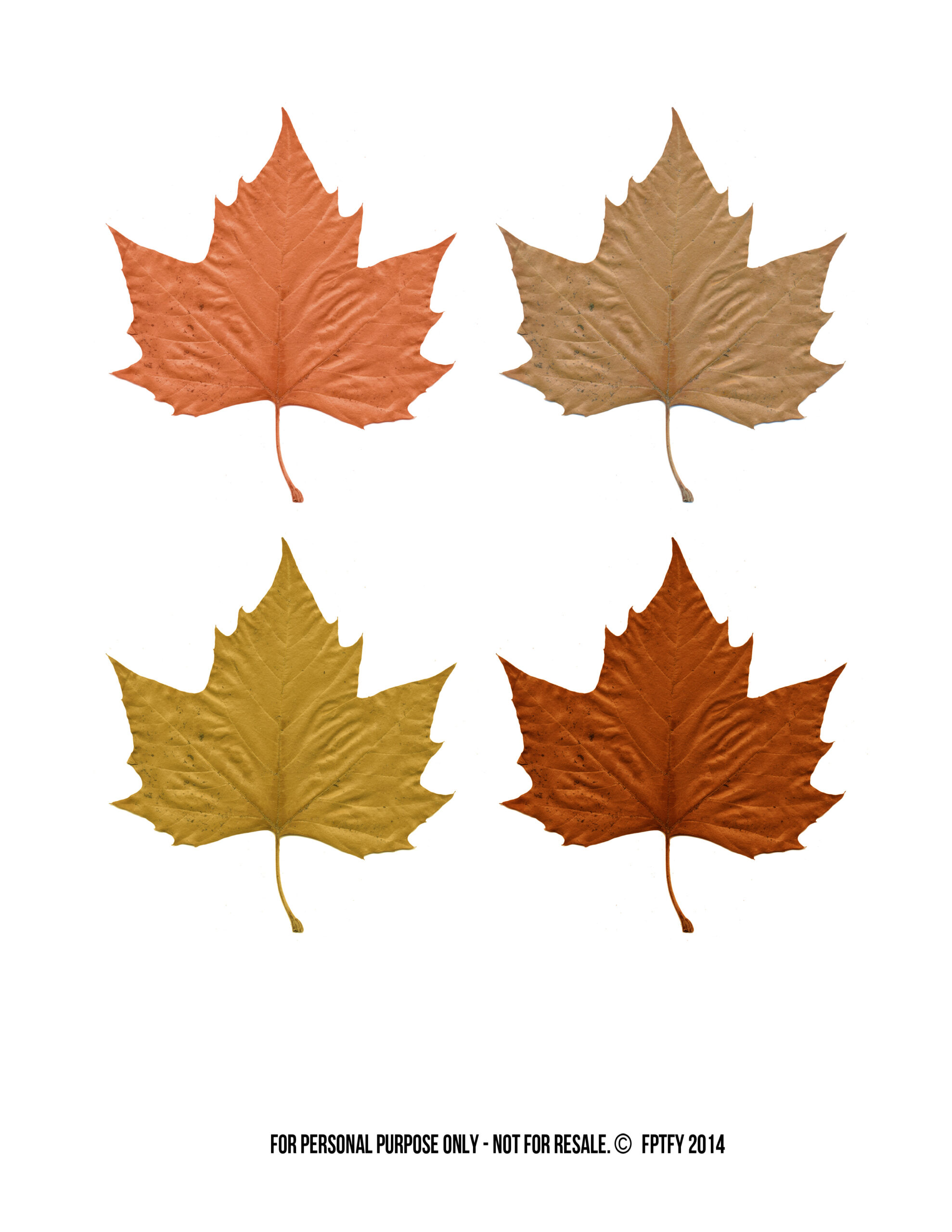 It's just a photo of Insane Fall Leaf Printable