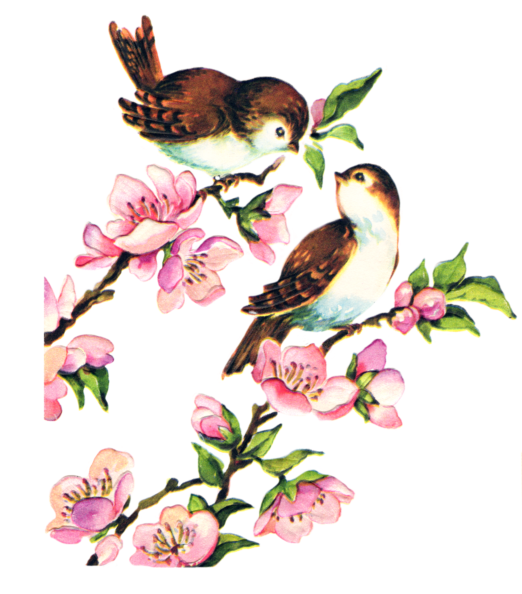 Free-collage-sheet-vintage-birds-FPTFY-5