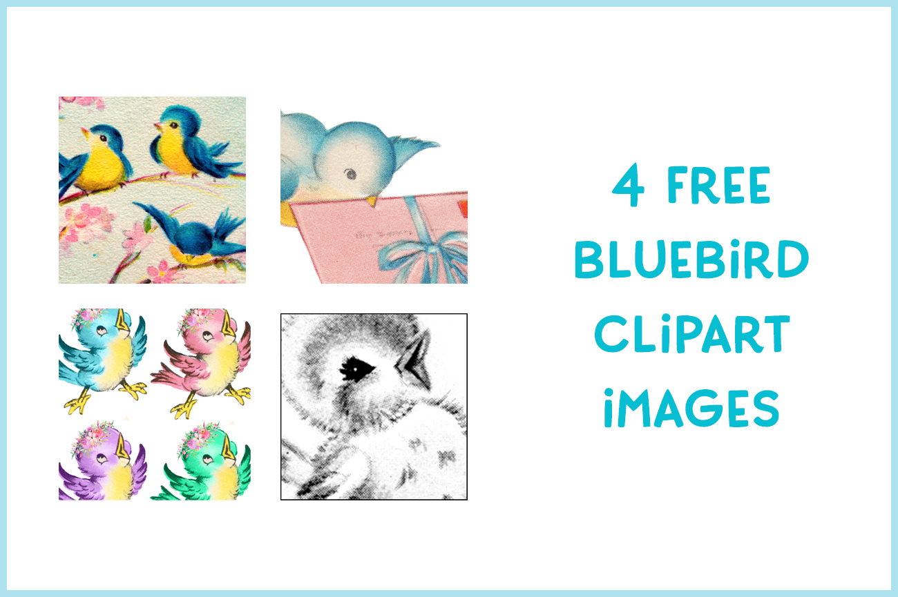 Four Free Bluebird Clipart images